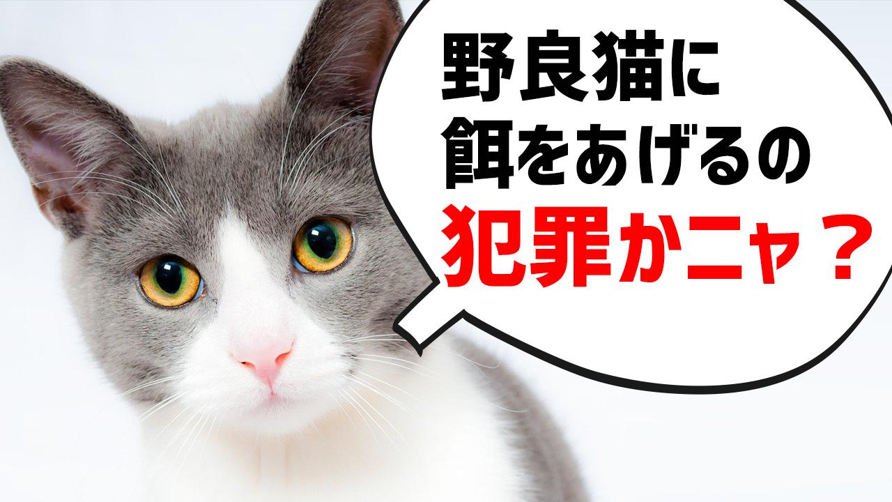 野良猫に餌をあげると犯罪になる?動物愛護の観点からも解説