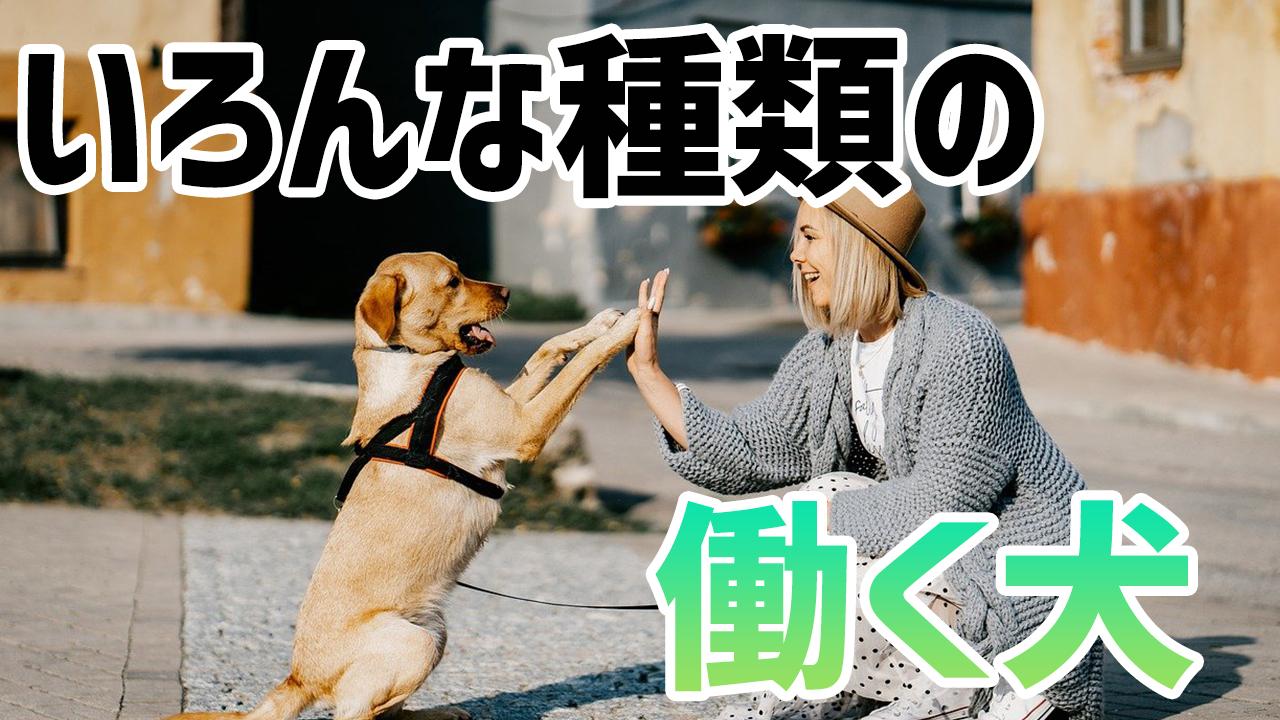 警察犬や盲導犬などの働く犬の仕事って何がある?種類も解説!