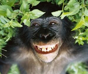 世界一LOVE&PEACEな類人猿、ボノボ!!