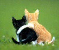 ほっこりする動物たちの癒し画像25選