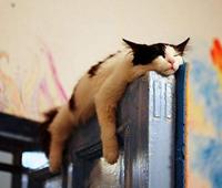 寝る場所が明らかにオカシイ猫の画像50連発!!