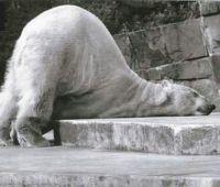 疲れた動物達の可愛らしすぎる寝姿画像20選!!