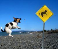 可愛くて面白い動物標識集めてみました。