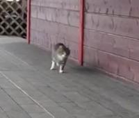 馬みたいにパカパカ歩く猫が可愛すぎる!