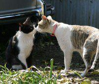 可愛いような可愛くないような、猫の発情期!