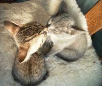 リア充の条件を猫の画像で表現してみた。
